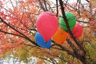 Kelima balon itu tersangkut di dahan sebuah pohon yang daun-daunnya memerah. Beberapa daun telah berguguran dan daun yang tersisa pun siap menyusul gugur.
