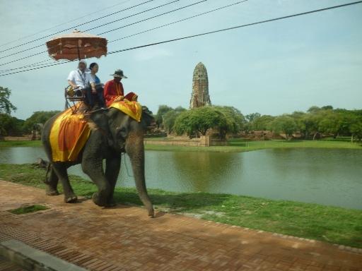 #tfp gajah