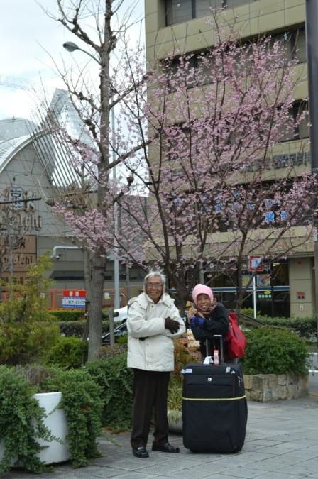 baru tiba di Kyoto.. Berfoto di bawah bunga sakura (atau momo ya?) dan kedinginan.. brrrr.....