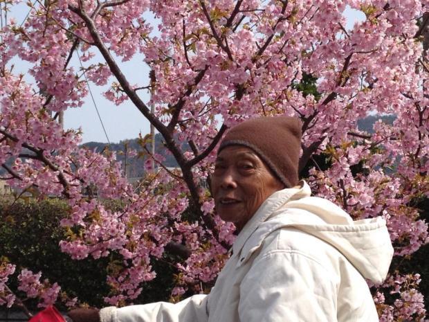 bapak sakura