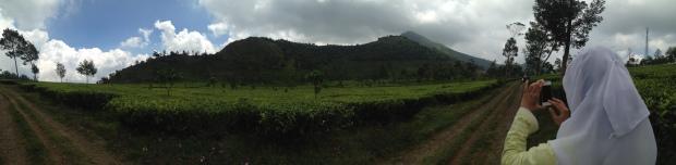 perkebunan teh Tambi #panorama