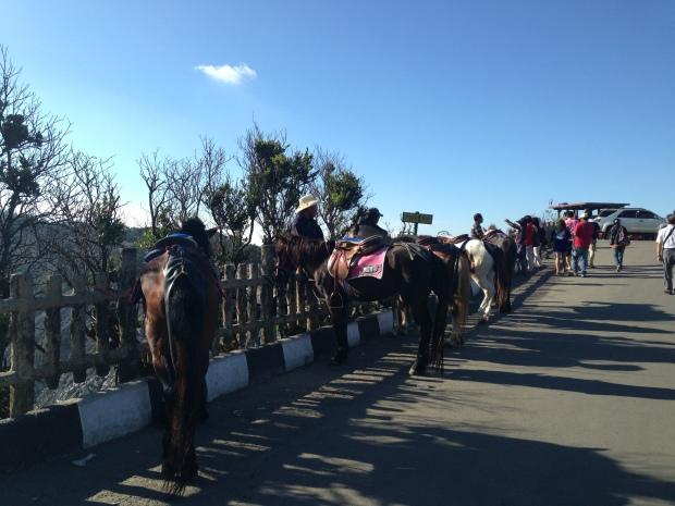 kuda-kuda sedang 'parkir' menunggu penunggang..
