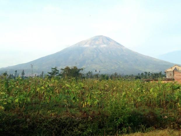 kebun tembakau di kaki gunung sindoro