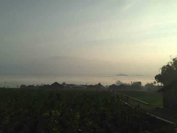kebun tembakau dan pemukiman yang tertutup kabut